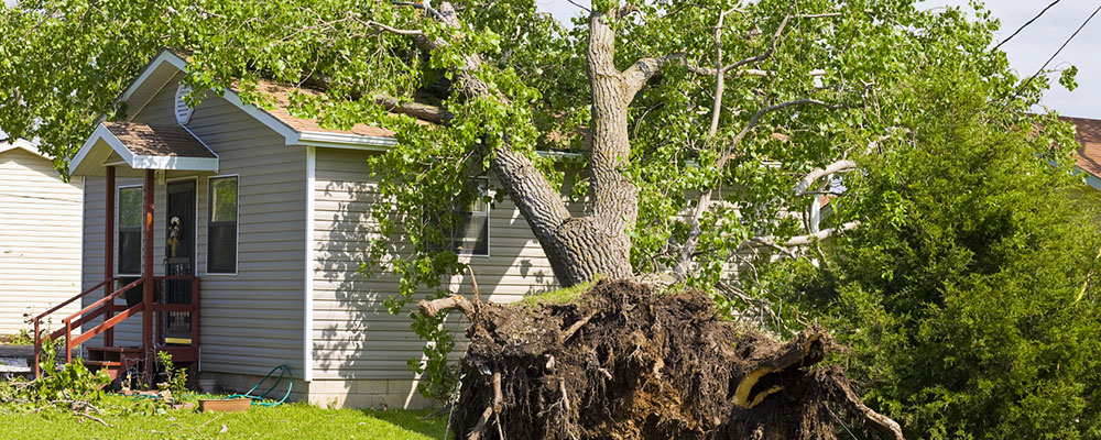 Emergency Tree Care